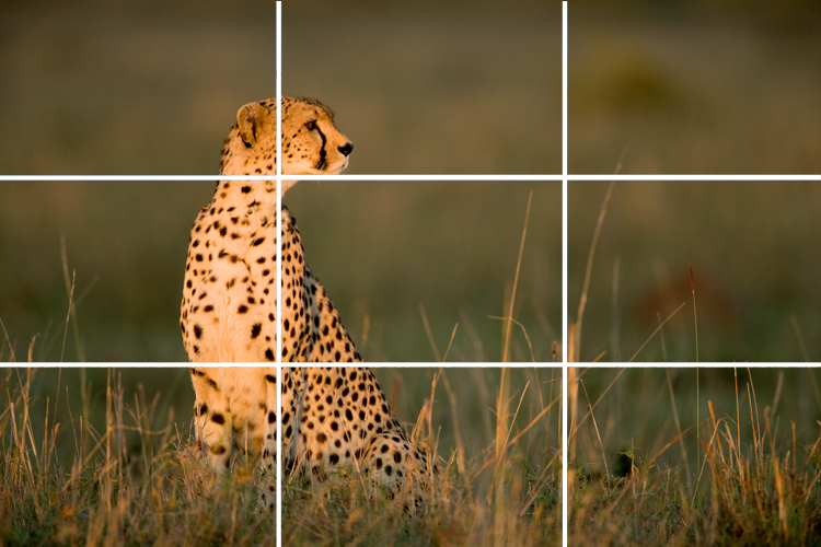 Understanding The Rule Of Thirds